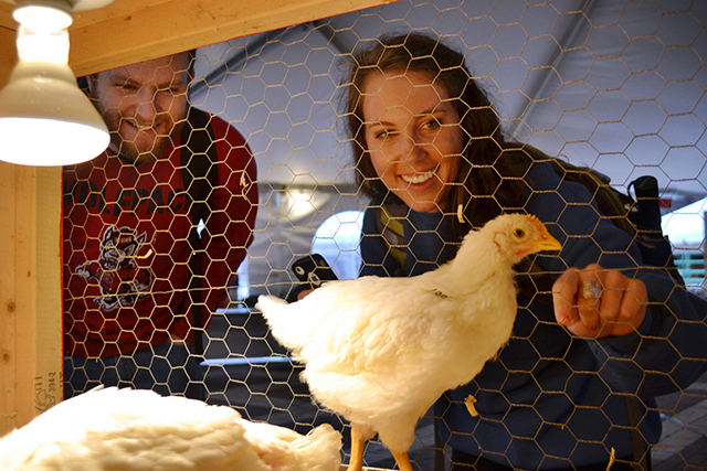 Taylor Jones, a junior in microbiology, and Lisa Angermeier, a junior in animal science, check out the poultry science club's live exhibit in the Brickyard March 18, 2013.  The exhibit, as a part of Agriculture Awareness Week, illustrates the genetic improvements made in meat-producing chickens over the past sixty years through selective breeding techniques alone. By:  Caide Wooten